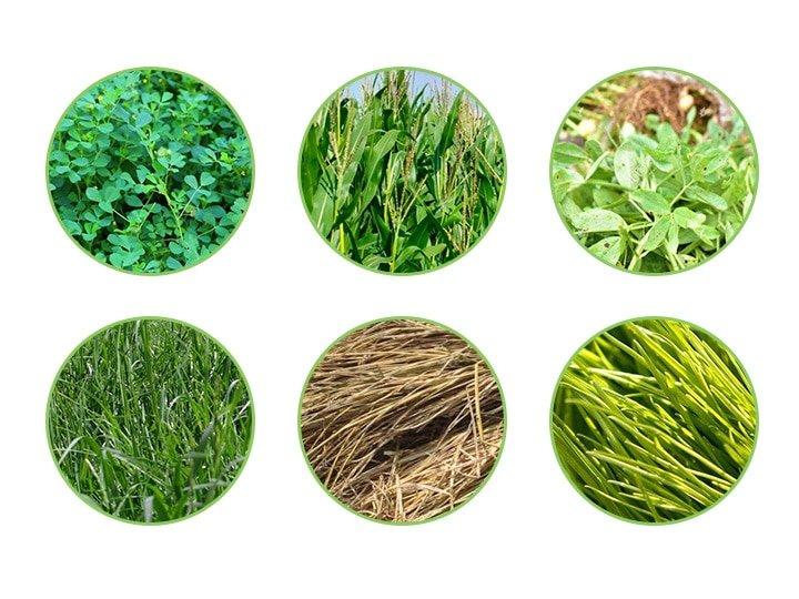 silage of corn stalks, ryegrass, alfalfa, reeds, peanut seedlings, cotton stalks