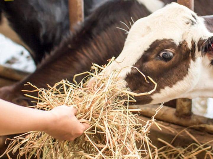 use-hay