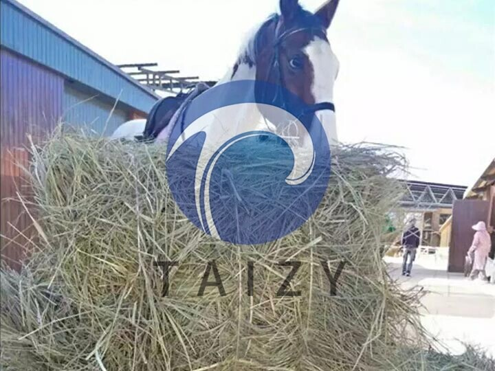 Square-straw-bales-in-aquaculture