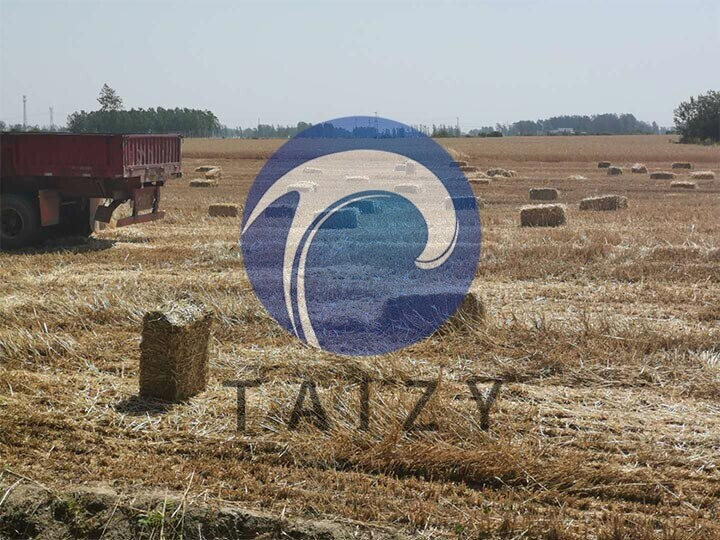 Square-straw-bales-in-the-field